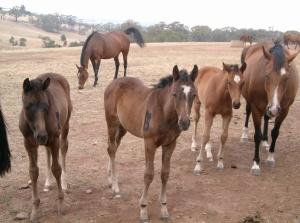 Racehorses-Life-Stud-Farm-1024x760
